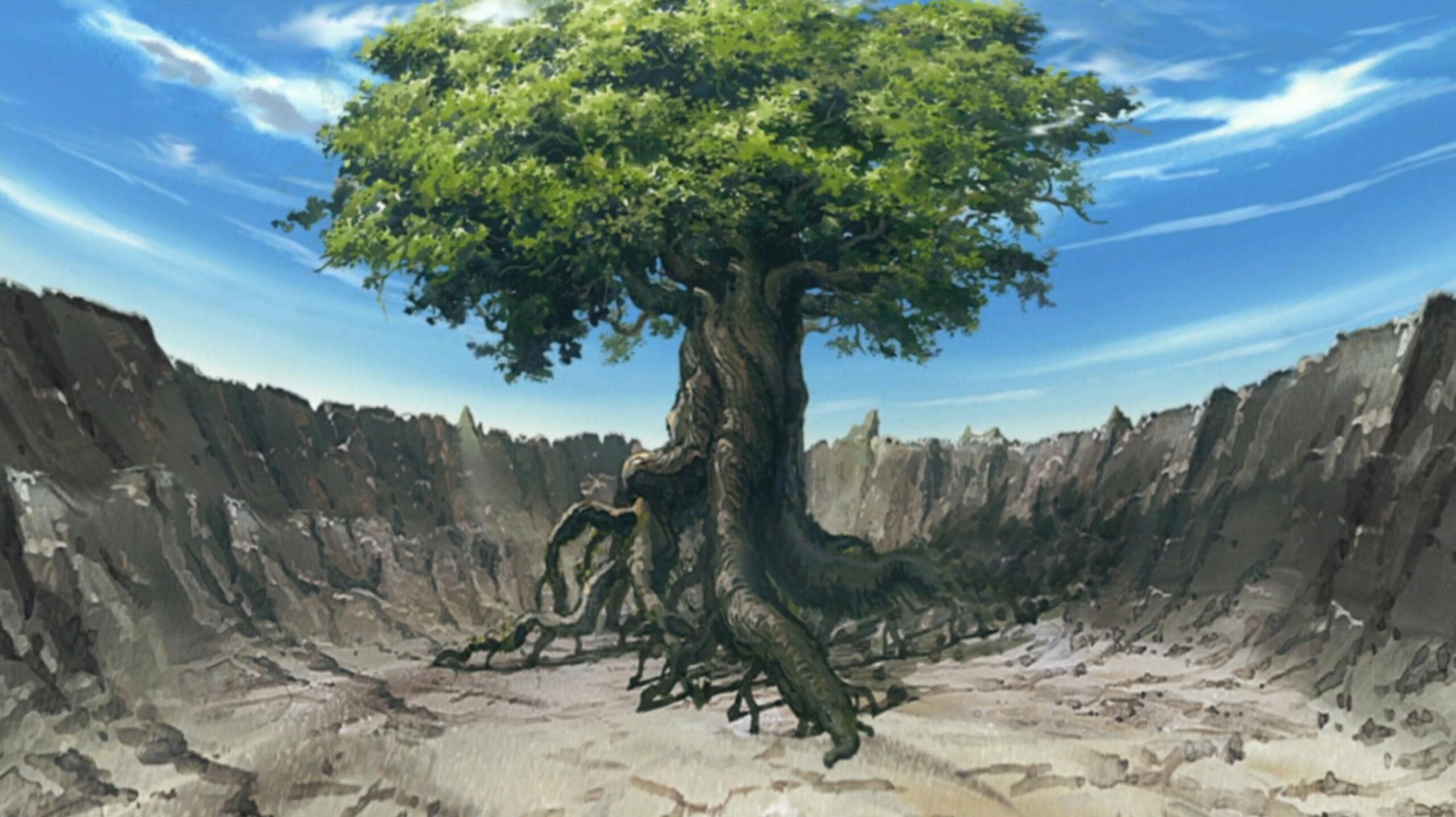 Дерево Бога. Свойства и применение