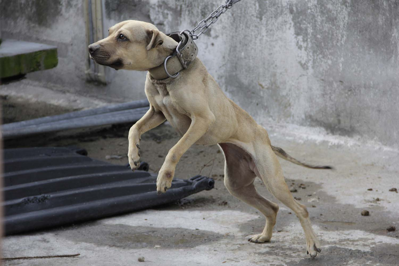 Proteccionistas protestarán en el Congreso en desacuerdo a un dictamen por la Ley de maltrato Animal