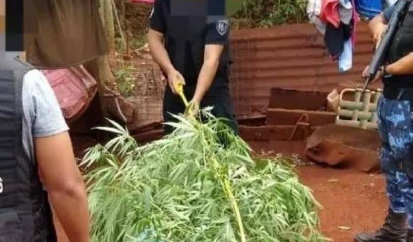 Una abuela de 74 años quedó detenida por cultivar marihuana para uso medicinal