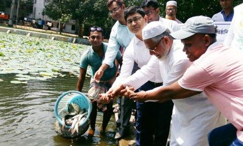 ধামইরহাটে ১১টি জলাশয়ে ৩৩৬ কেজি মাছের পোনা অবমুক্ত