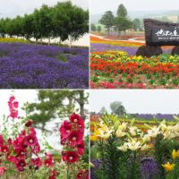 美瑛・ぜるぶの丘の花景色