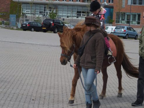 Ponytræk