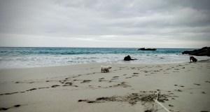 Spiaggia Cala Rtjada, Son Moll, Maiorca