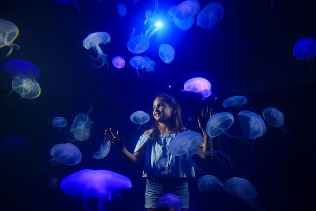 Medusario Palma Aquarium