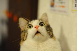 驚き、ネコ