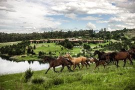 Horses and the view at Drakensberg Sun Hotel