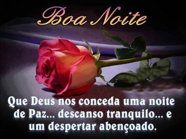 Boa noite com carinho especial e uma flor de dicada com carinho