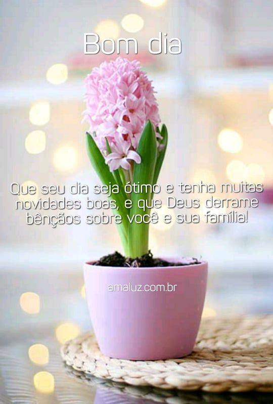 bom dia desejo um ótimo dia com bençãos e novidades