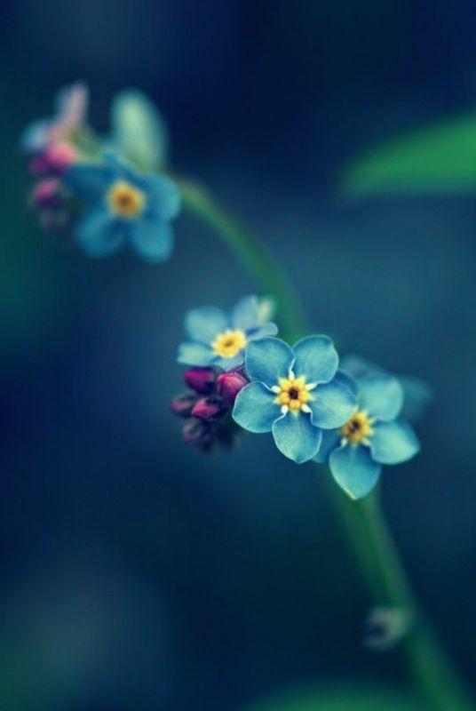 fundo azul embarçado com lindas flores azuis