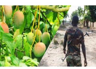 Nigerian Soldier Tortures 10-Year-Old Boy To Death For Plucking Mangoes In Barracks.