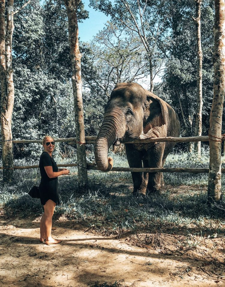 Woman feeding an elephant at the Phuket Elephant Sanctuary