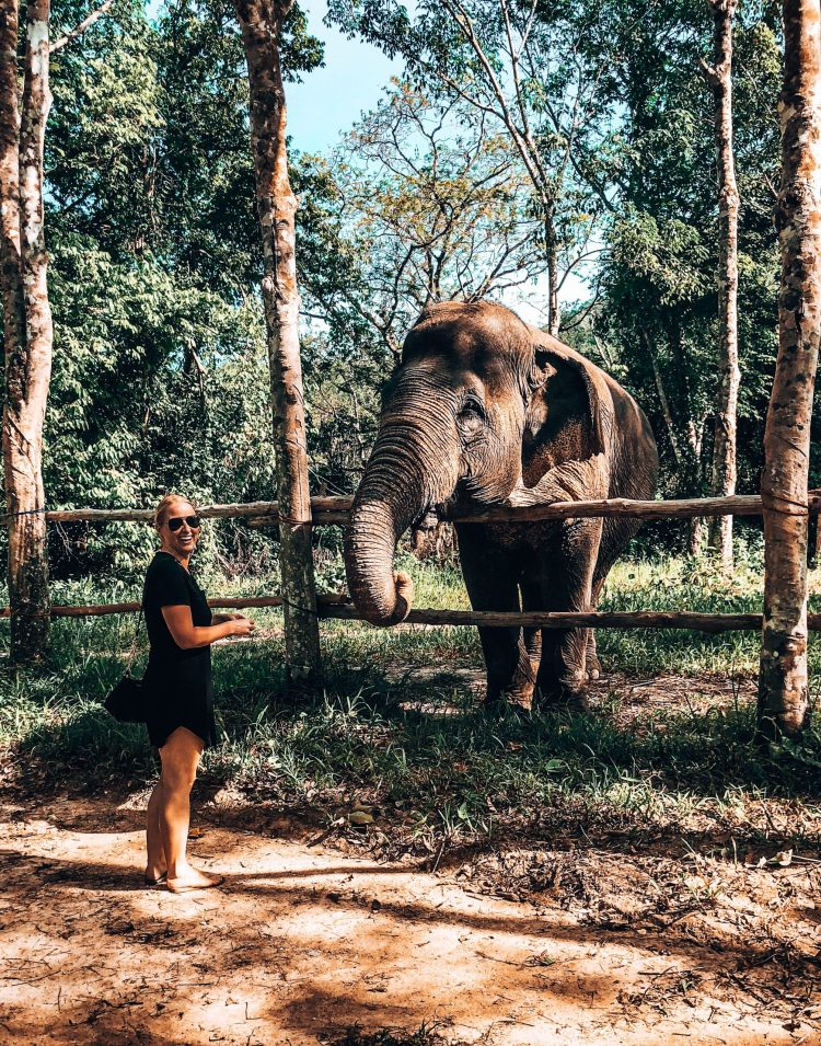 woman feeding elephant at ethical elephant sanctuary