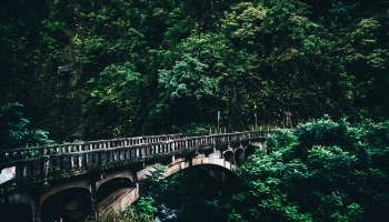 Bridge along the Road to Hana jutting out of the rainforest and over a creek
