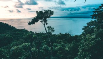 View of the jungle going out to the ocean during sunset, one tree sticking out above the rest