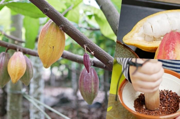 巧克力農莊生態導覽『喜樂可可咖啡園』趣味DIY可可冰淇淋手作體驗!屏東親子景點 屏東高樹鄉