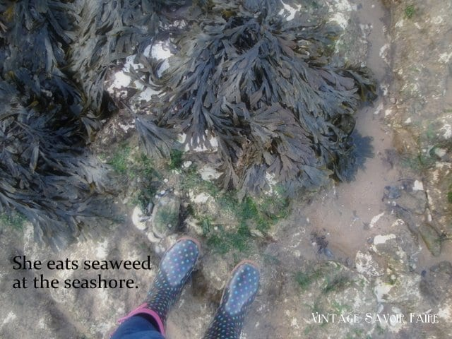 amandacook.me Eating seaweed - my wild food weekend, part 2