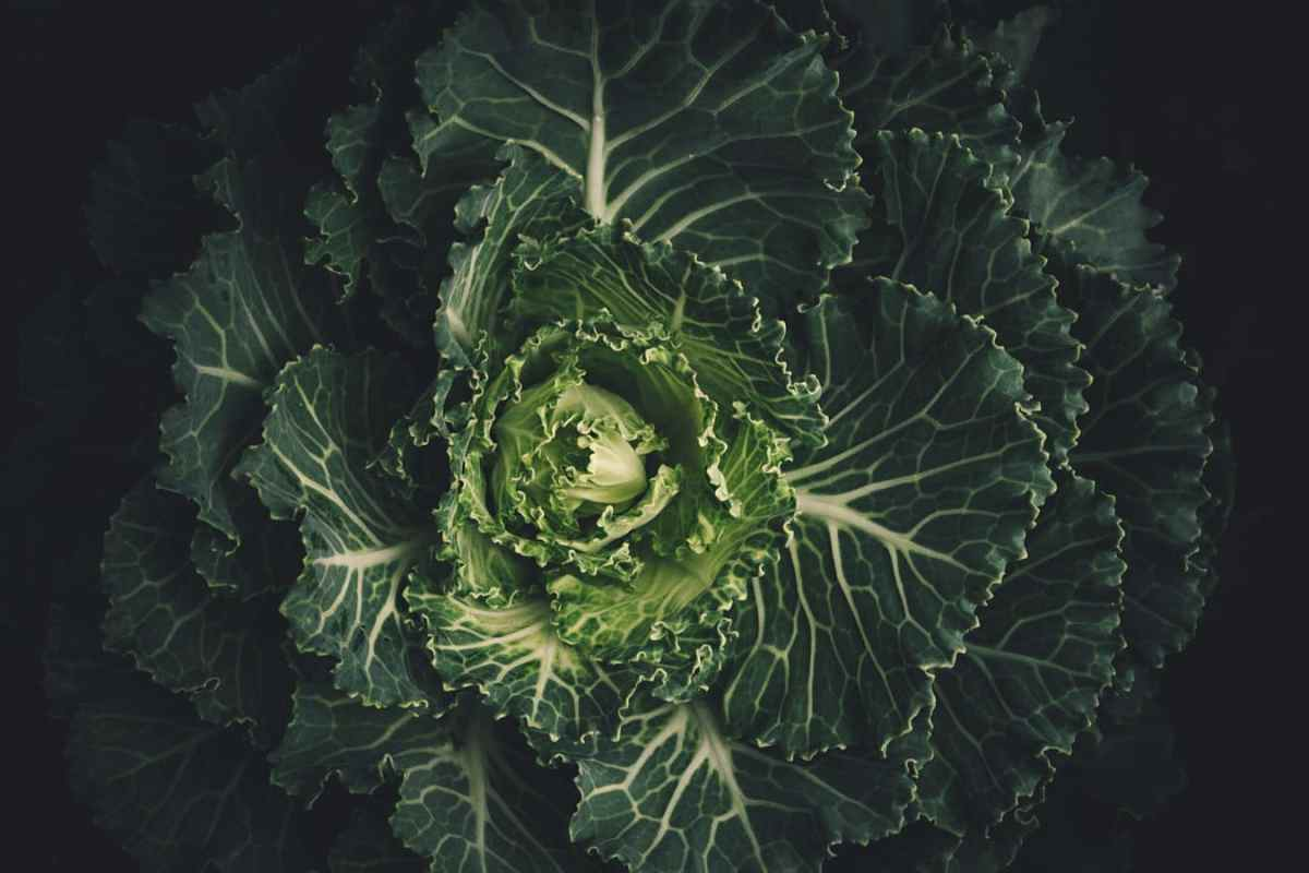 The kale-thyroid connection