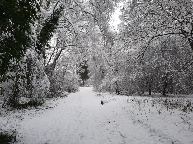 Snowy trees on the 'Lines', the railway paths in Durham