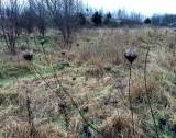 Hearts on sticks
