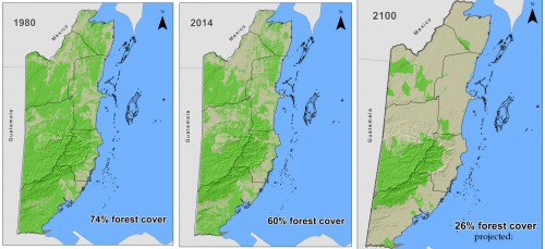 Belize's dwindling forest cover