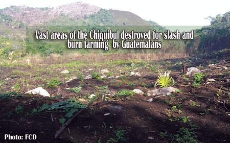 Chiquibul-razed-for-illegal
