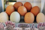 Yummy fresh eggs