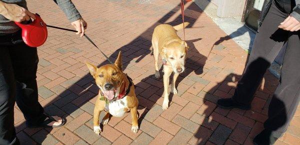 Winston and Izzy