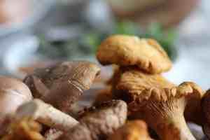 mushrooms, close up of mushrooms, chantrelle mushrooms