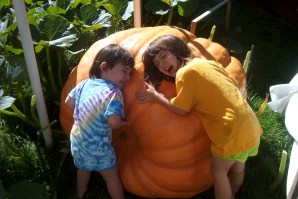 Our first big pumpkin was named Julia and weighed 492 pounds!