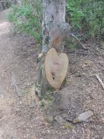 Corazón en un árbol.