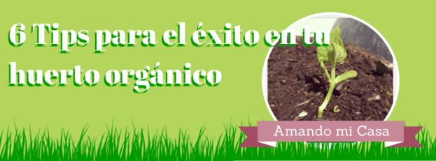 Exito en el huerto organico