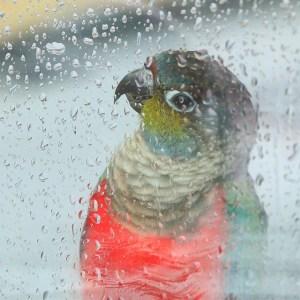 雨をながめる鳥さん