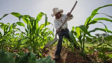 Photo of Diputado Juan Guevara pide más presupuesto para el campo queretano
