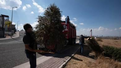 Photo of El Marqués recolecta árboles de Navidad