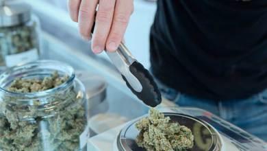 Photo of Cannabis ayuda a tratar síntomas fatales de Covid-19