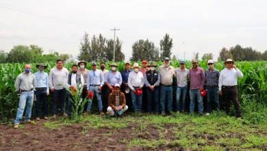 Photo of Mejora la producción de maíz con programa de alto rendimiento