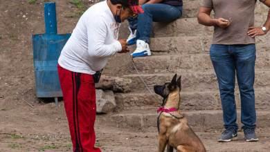 Photo of Inicia taller perros en equilibrio en San Juan del Río