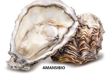 Huîtres  puissant aphrodisiaque