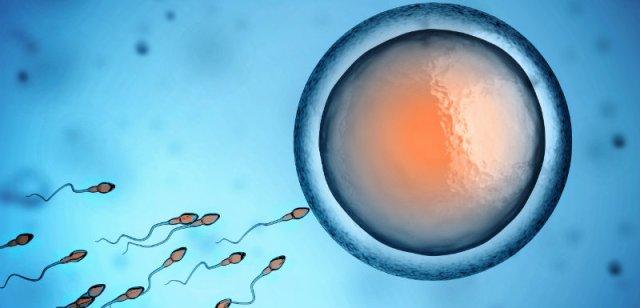 Infertilité masculine  Causes et symptômes
