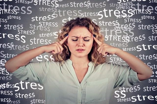 Le ginseng indien et la réduction des niveaux de cortisol