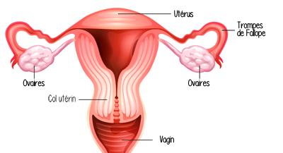 C'est quoi la fertilité ?