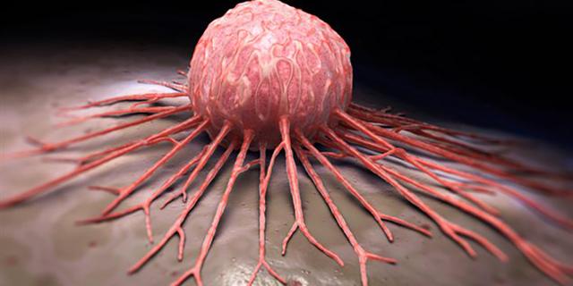 la racine de pissenlit une plante pour réduire les fibromes