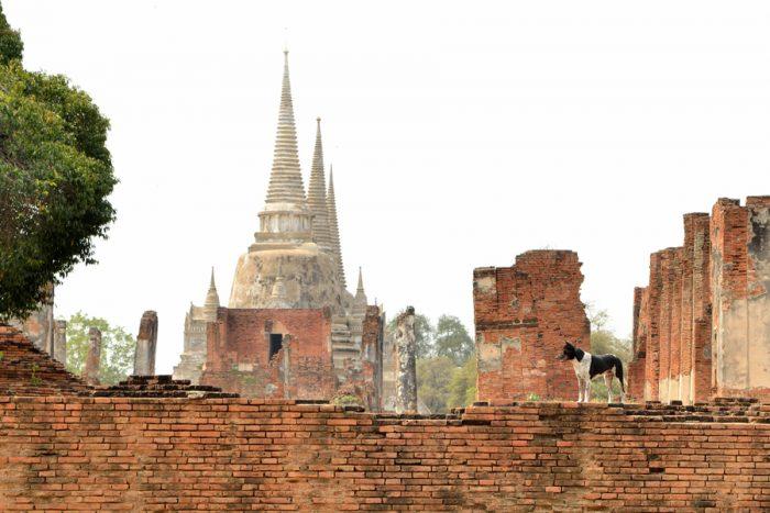 Ayutthaya, ancienne cité royale fondée en 1350, on voit au loin le wat Phra Si Sanphet