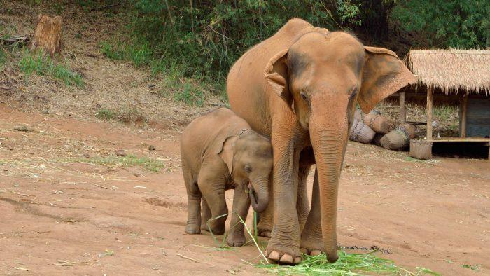 Nous avons fait une promenade d'une journée à dos d'éléphant à Patara Elephant Farm.