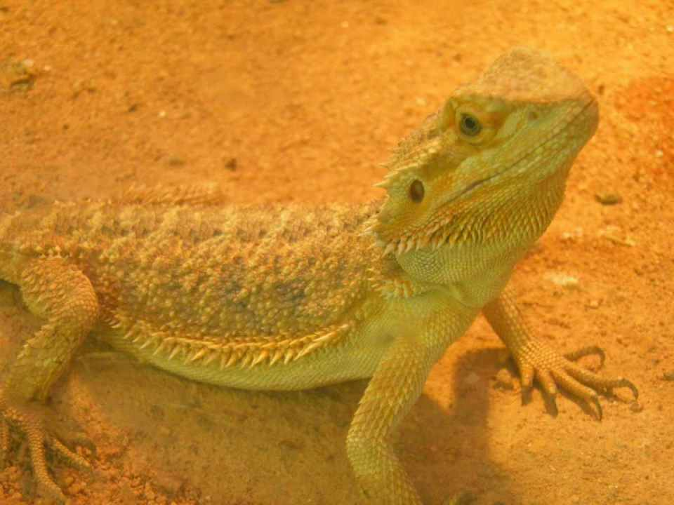 Reptilário do Zoo