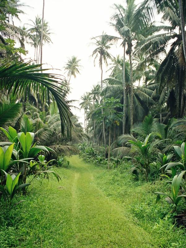 Interior da Ilha de São Tomé