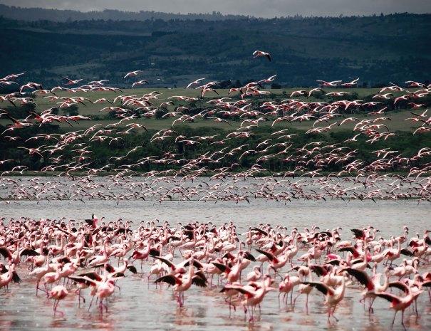 Rundreise Mexiko Flamingos