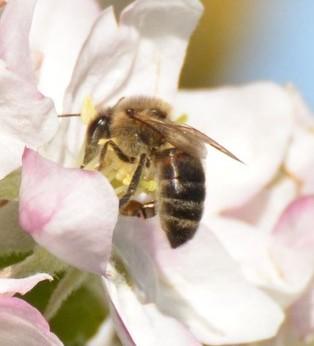 🐝 Le miel, c'est maintenant ! (jusqu'au 19 septembre)