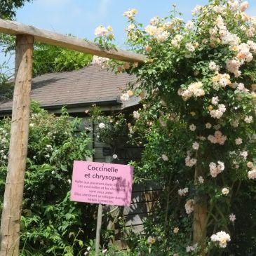 Sortie au jardin de Morailles, le samedi 18 mai