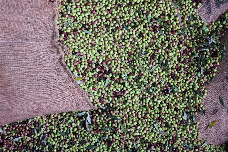 Contrat huile d'olive disponible jusqu'au 31 janvier